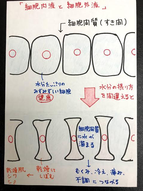 なぜ入浴後に白湯を飲むと効率よく細胞に水分が吸収されるのか?を分かりやすく絵に描いてみました