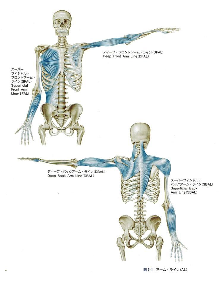 【動画あり】肩を一切さわらずに肩こりを改善する方法とは?