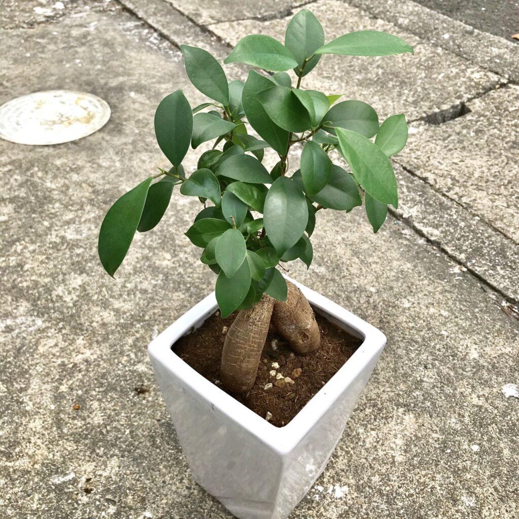 植物を育てて、癒されよう♪
